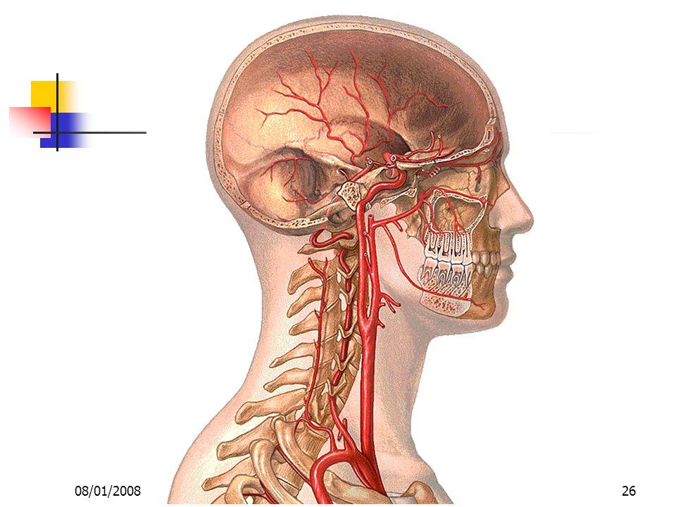 08/01/2008 Dr. ABDALLAH - Appareil circulatoire26