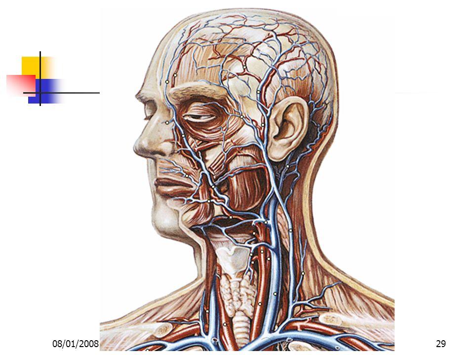 08/01/2008 Dr. ABDALLAH - Appareil circulatoire29