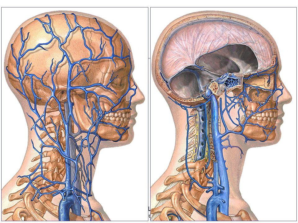 08/01/2008 Dr. ABDALLAH - Appareil circulatoire30