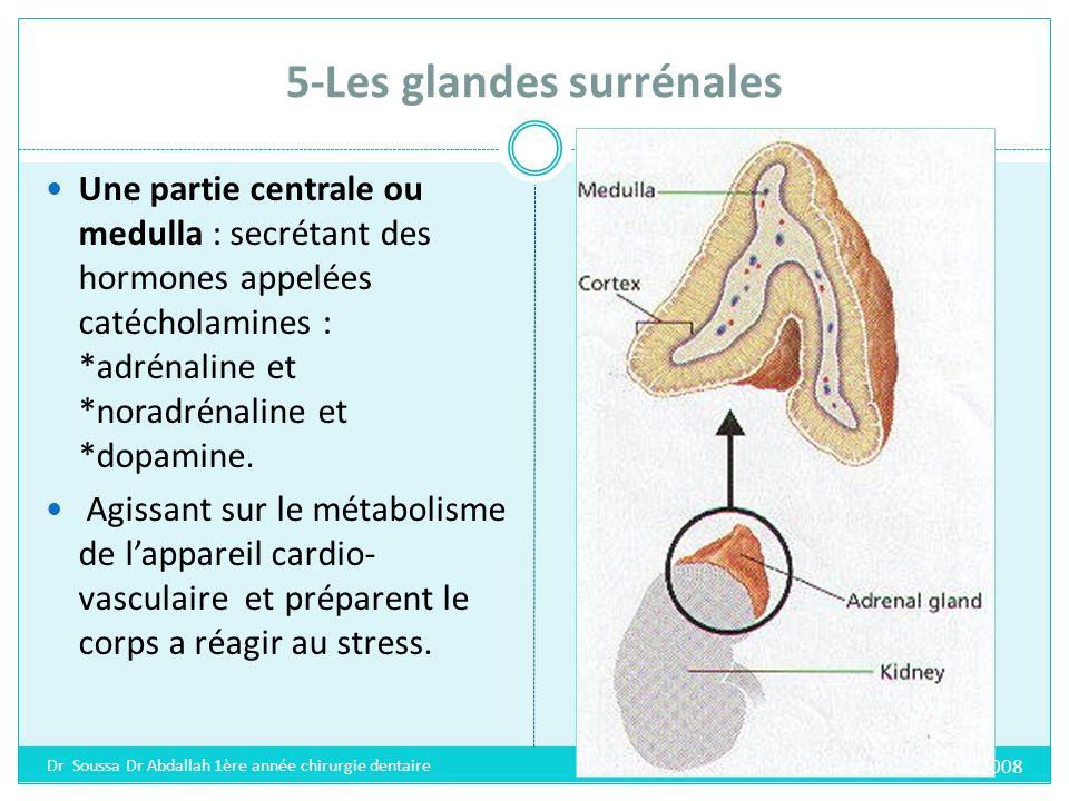 5-Les glandes surrénales Une partie périphérique ou cortex : produisant des hormones régulant le métabolisme du sodium, du potassium et des hormones sexuelles males.