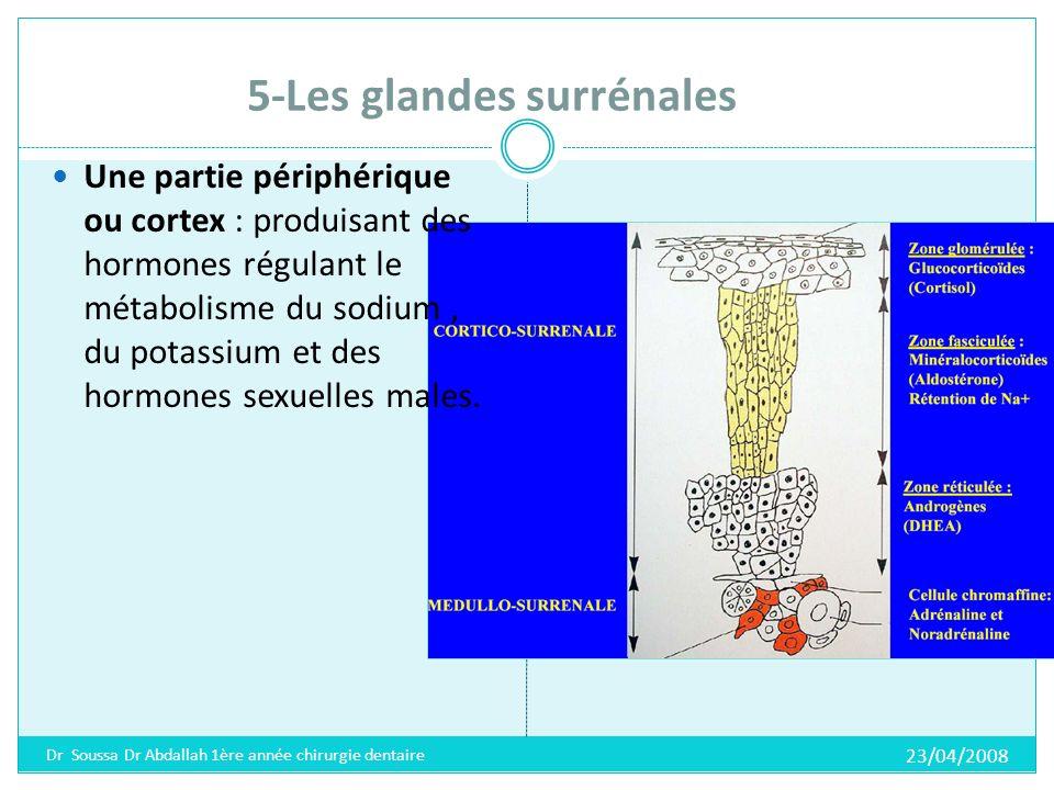 5-Les glandes surrénales Hormones de la corticosurrénale Minéralo-corticoïdes (aldostérone): Augmentation du taux de sodium et deau dans le sang.