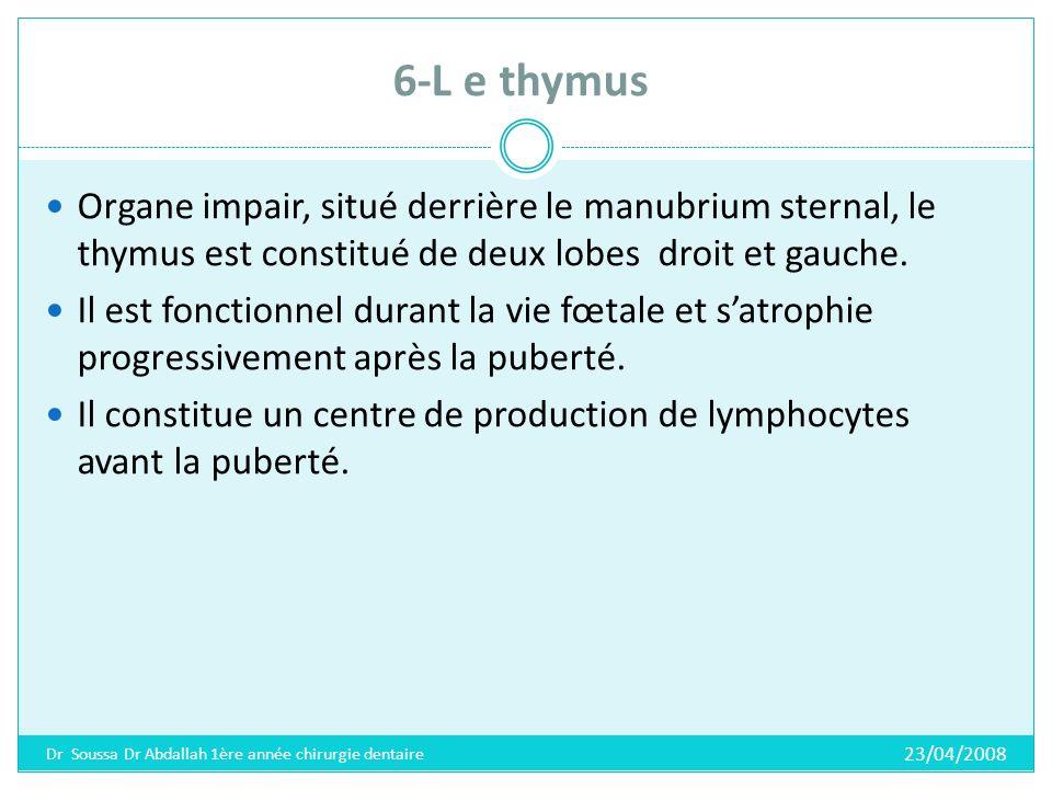 7-L e pancréas Cest une glande mixte, aplatie et étalée en longueur, située profondément dans labdomen.