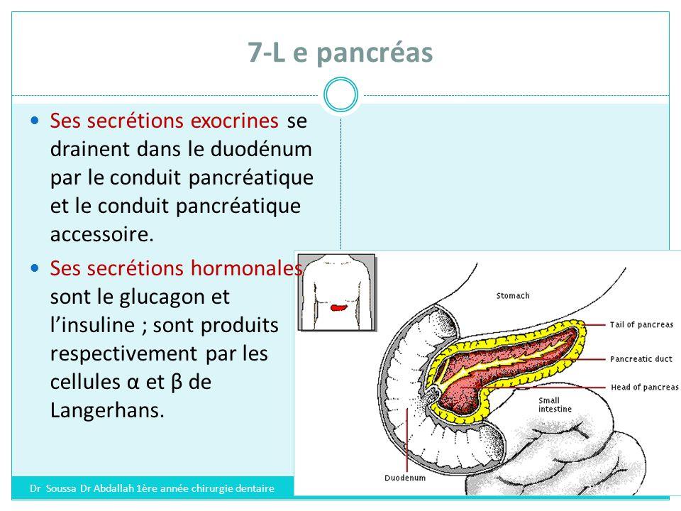 8-L e testicule Le testicule est une glande paire, mixte, produisant les spermatozoïdes et des hormones sexuelles 23/04/2008 Dr Soussa Dr Abdallah 1ère année chirurgie dentaire
