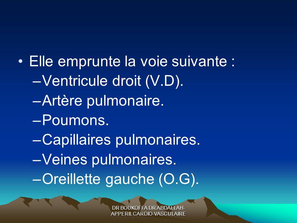 DR BOUKOFFA DR ABDALLAH- APPERIL CARDIO-VASCULAIRE Elle emprunte la voie suivante : –Ventricule droit (V.D). –Artère pulmonaire. –Poumons. –Capillaire