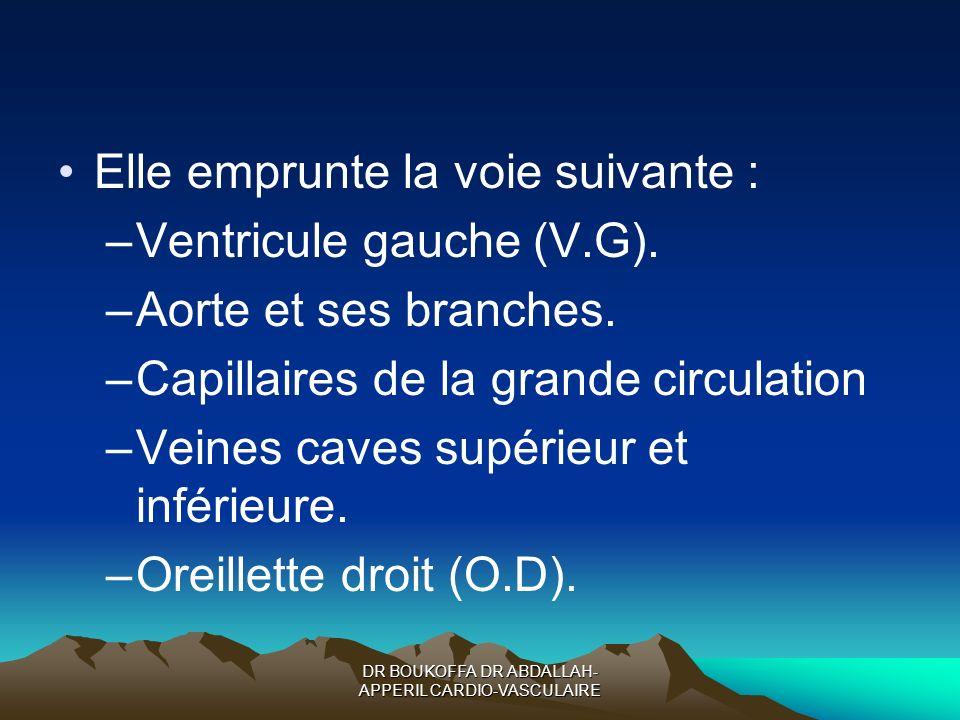 DR BOUKOFFA DR ABDALLAH- APPERIL CARDIO-VASCULAIRE Elle emprunte la voie suivante : –Ventricule gauche (V.G). –Aorte et ses branches. –Capillaires de