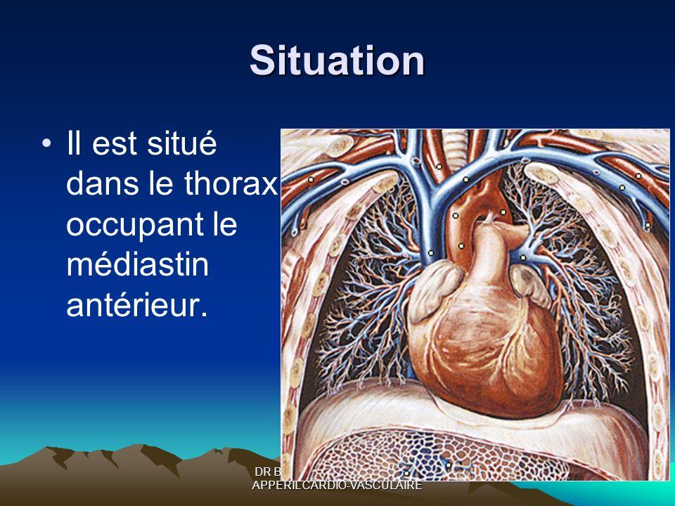 DR BOUKOFFA DR ABDALLAH- APPERIL CARDIO-VASCULAIRE Situation Il est situé dans le thorax occupant le médiastin antérieur.