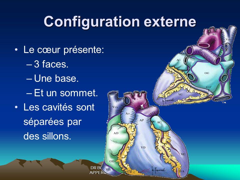DR BOUKOFFA DR ABDALLAH- APPERIL CARDIO-VASCULAIRE Configuration externe Le cœur présente: –3 faces. –Une base. –Et un sommet. Les cavités sont séparé