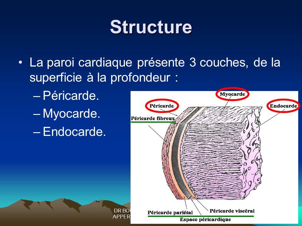 DR BOUKOFFA DR ABDALLAH- APPERIL CARDIO-VASCULAIRE Structure La paroi cardiaque présente 3 couches, de la superficie à la profondeur : –Péricarde. –My