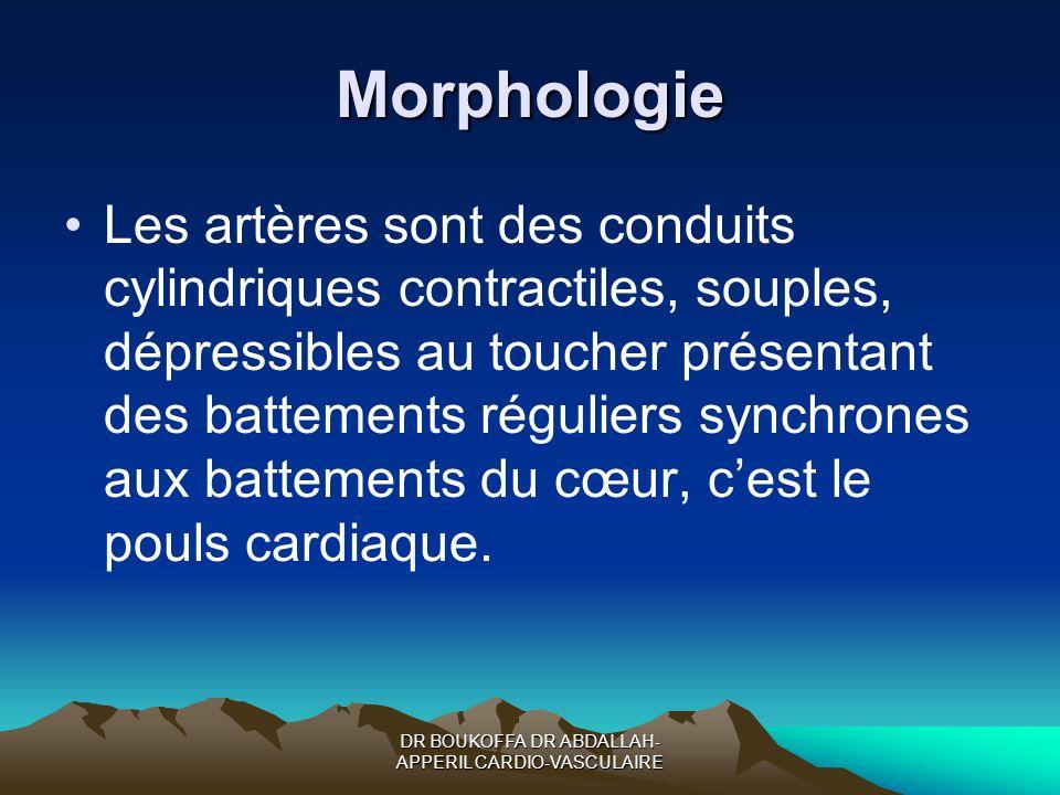 Morphologie Les artères sont des conduits cylindriques contractiles, souples, dépressibles au toucher présentant des battements réguliers synchrones a