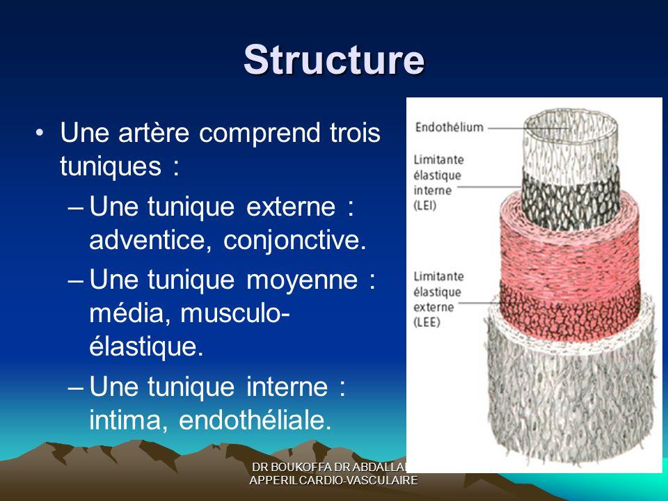 Structure Une artère comprend trois tuniques : –Une tunique externe : adventice, conjonctive. –Une tunique moyenne : média, musculo- élastique. –Une t