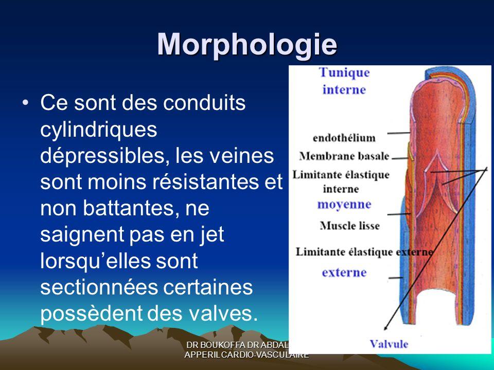 DR BOUKOFFA DR ABDALLAH- APPERIL CARDIO-VASCULAIRE Morphologie Ce sont des conduits cylindriques dépressibles, les veines sont moins résistantes et no