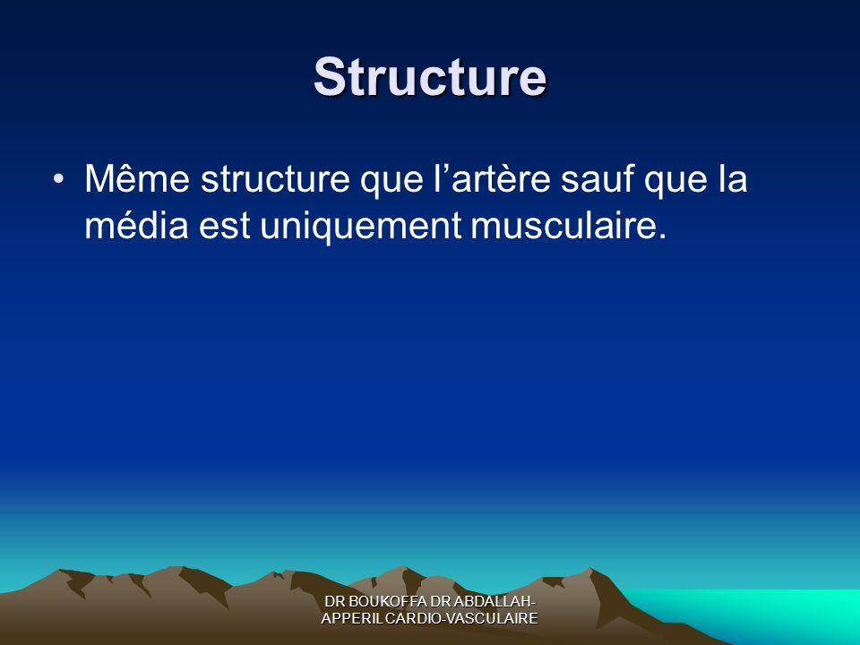 Structure Même structure que lartère sauf que la média est uniquement musculaire.