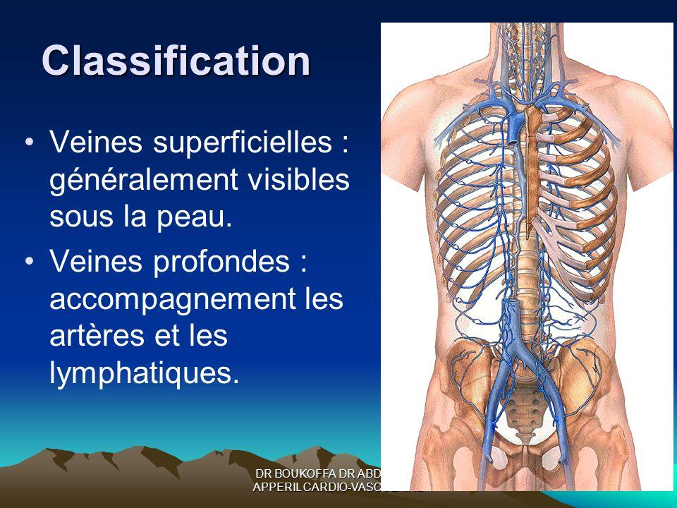 Classification Veines superficielles : généralement visibles sous la peau. Veines profondes : accompagnement les artères et les lymphatiques.