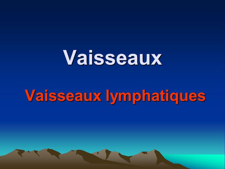 Vaisseaux Vaisseaux lymphatiques