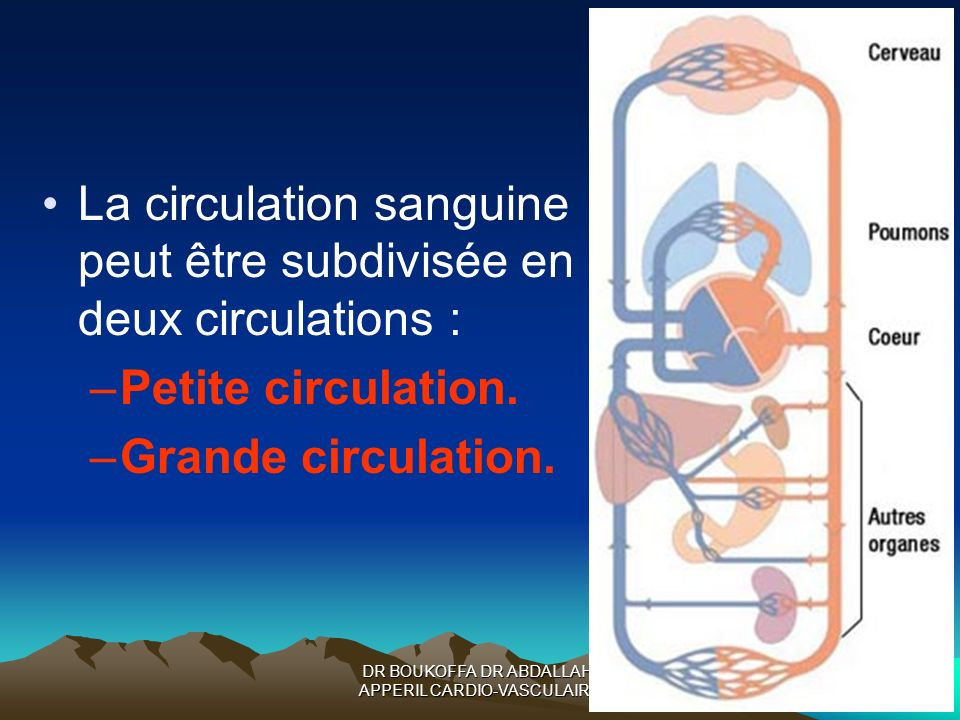 DR BOUKOFFA DR ABDALLAH- APPERIL CARDIO-VASCULAIRE La circulation sanguine peut être subdivisée en deux circulations : –Petite circulation. –Grande ci