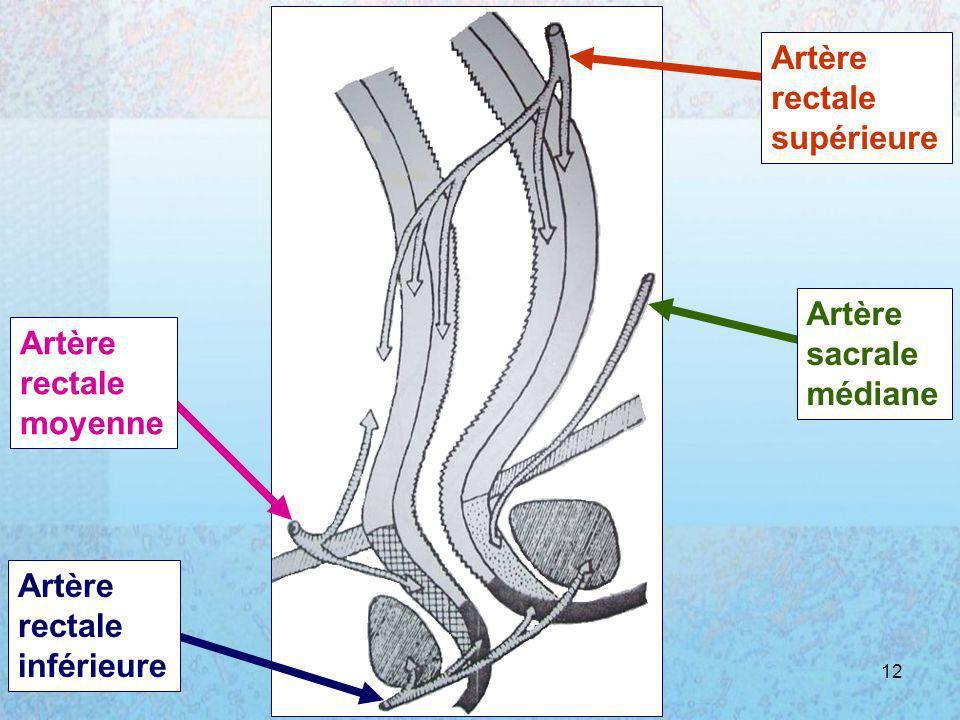 05/01/2008Dr. ABDALLAH - Rectum12 Artère rectale supérieure Artère sacrale médiane Artère rectale moyenne Artère rectale inférieure