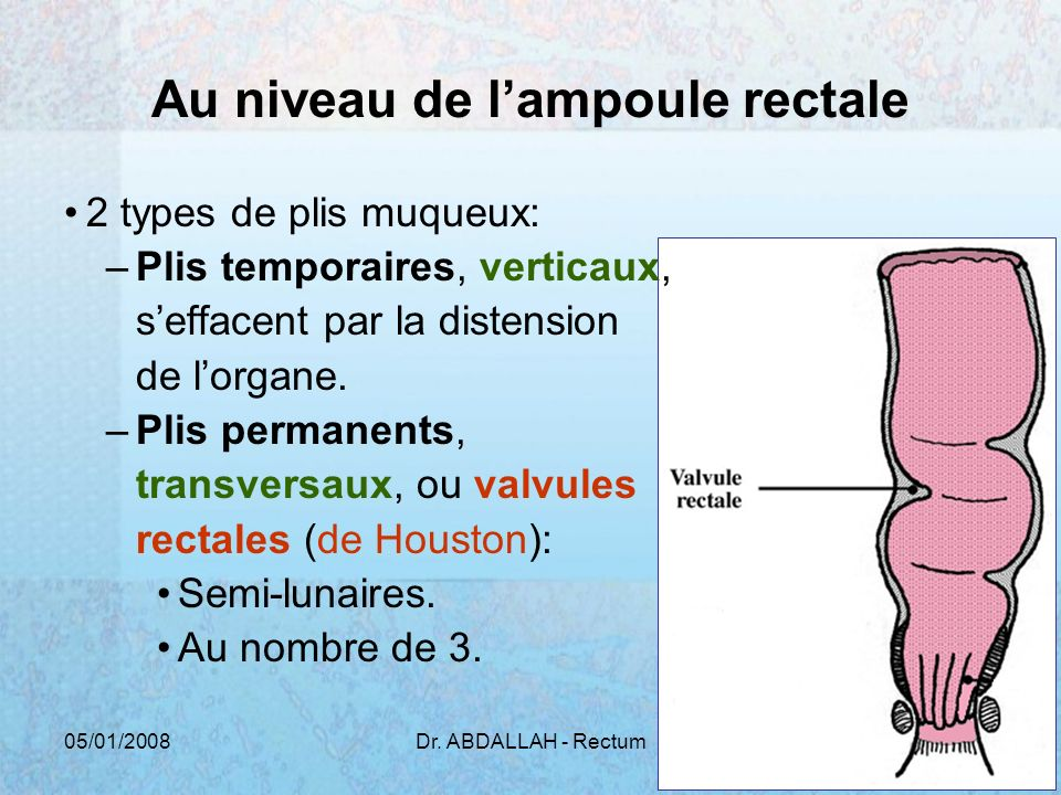 05/01/2008Dr. ABDALLAH - Rectum20 Au niveau de lampoule rectale 2 types de plis muqueux: –Plis temporaires, verticaux, seffacent par la distension de
