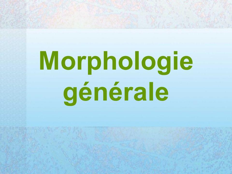 Morphologie générale