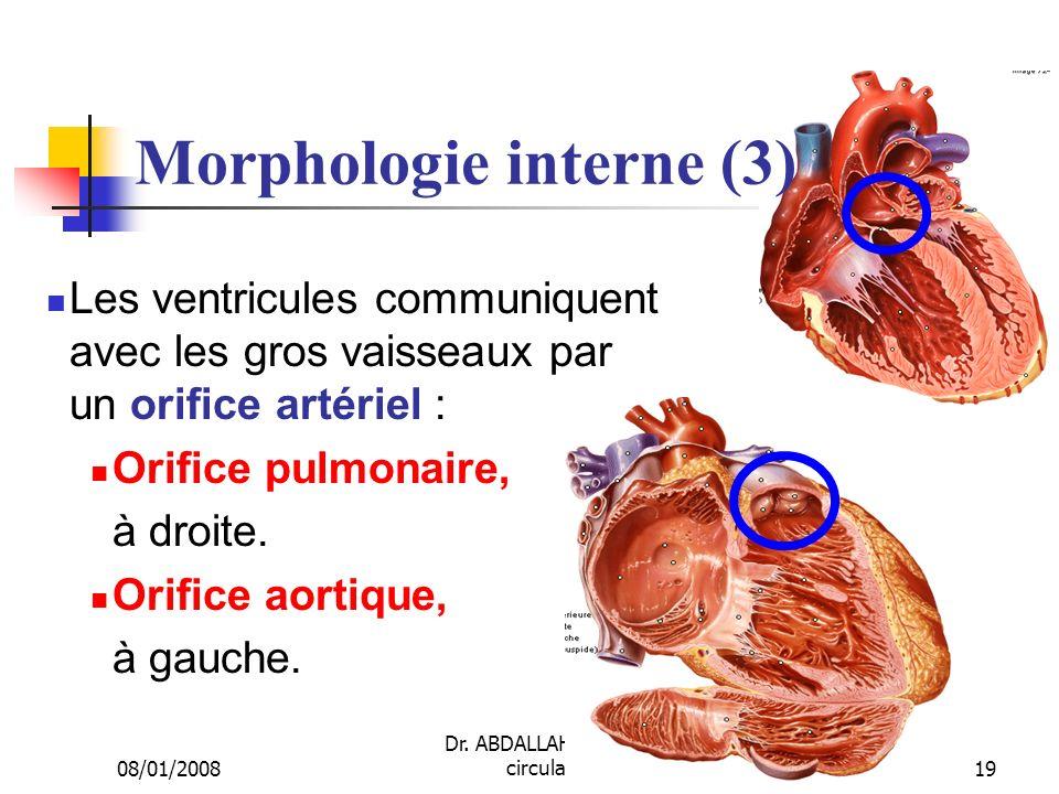 08/01/2008 Dr. ABDALLAH - Appareil circulatoire19 Morphologie interne (3) Les ventricules communiquent avec les gros vaisseaux par un orifice artériel