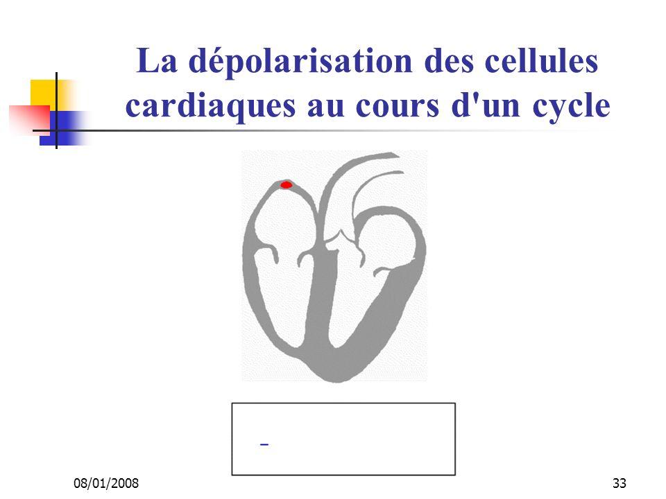 08/01/2008 Dr. ABDALLAH - Appareil circulatoire33 La dépolarisation des cellules cardiaques au cours d'un cycle