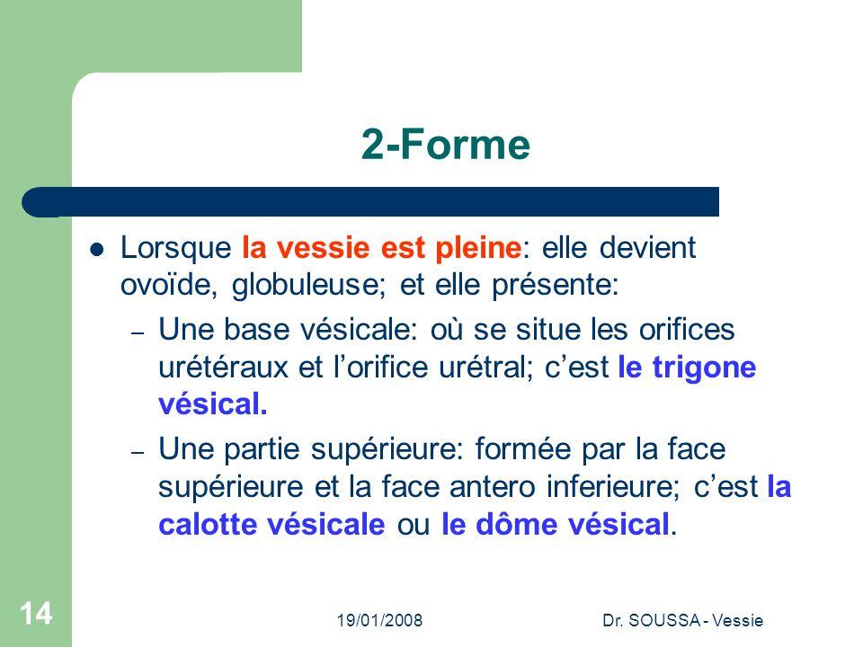 19/01/2008Dr. SOUSSA - Vessie 14 2-Forme Lorsque la vessie est pleine: elle devient ovoïde, globuleuse; et elle présente: – Une base vésicale: où se s