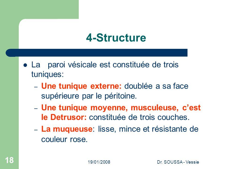 19/01/2008Dr. SOUSSA - Vessie 18 4-Structure La paroi vésicale est constituée de trois tuniques: – Une tunique externe: doublée a sa face supérieure p