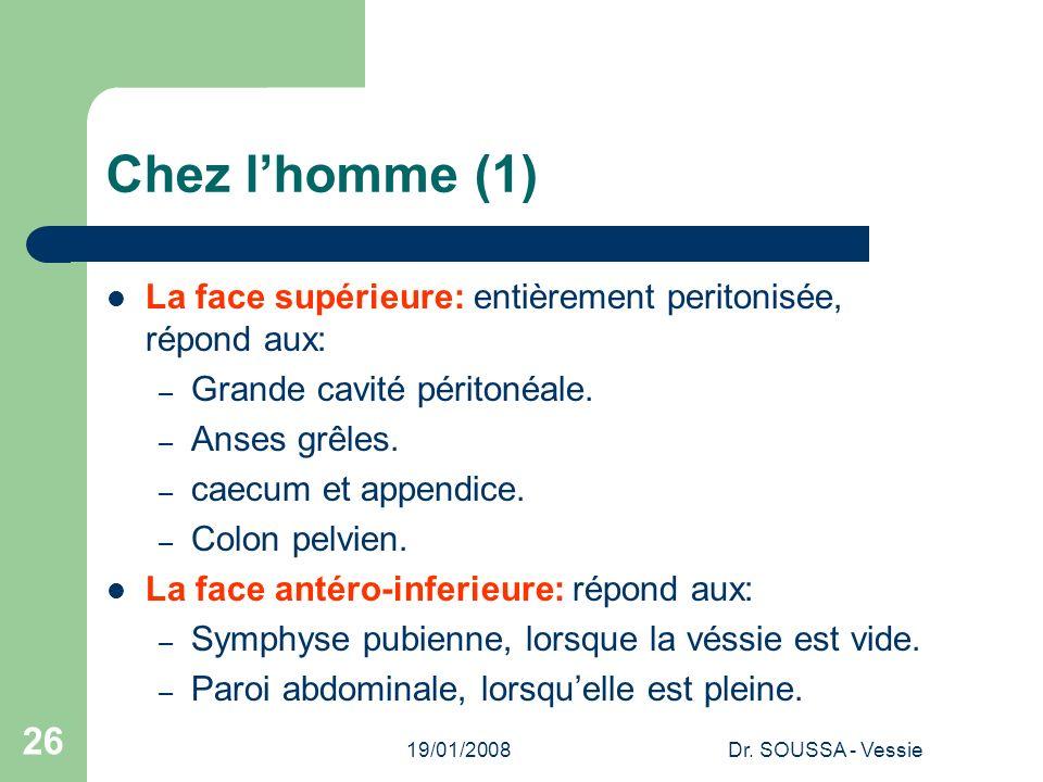 19/01/2008Dr. SOUSSA - Vessie 26 Chez lhomme (1) La face supérieure: entièrement peritonisée, répond aux: – Grande cavité péritonéale. – Anses grêles.