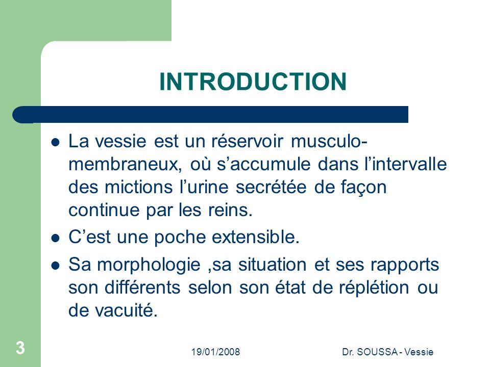 19/01/2008Dr. SOUSSA - Vessie 3 INTRODUCTION La vessie est un réservoir musculo- membraneux, où saccumule dans lintervalle des mictions lurine secrété