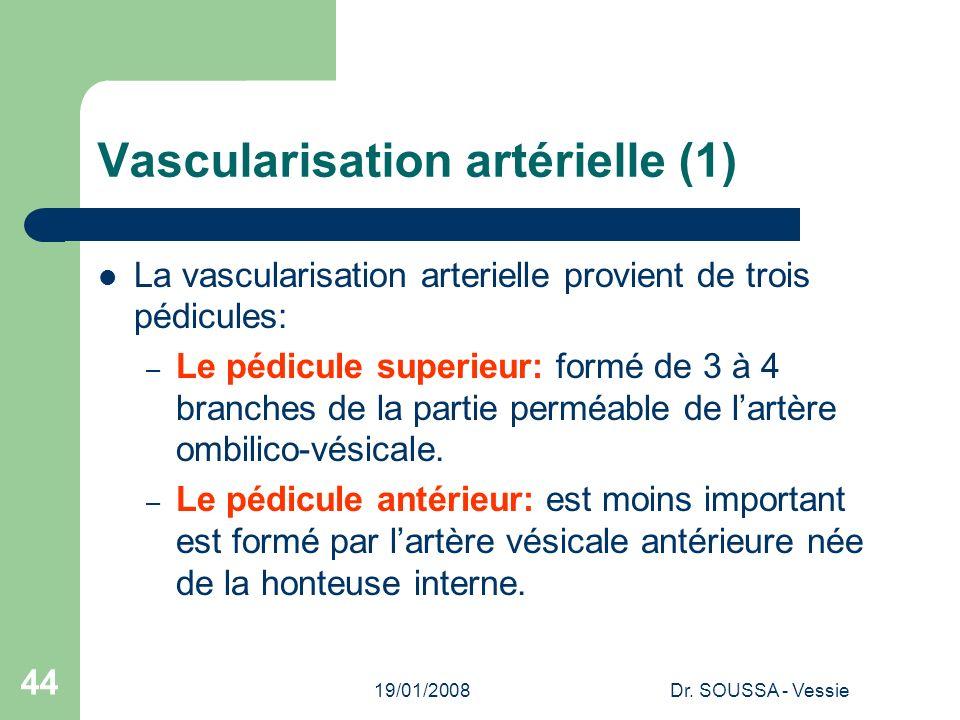 19/01/2008Dr. SOUSSA - Vessie 44 Vascularisation artérielle (1) La vascularisation arterielle provient de trois pédicules: – Le pédicule superieur: fo