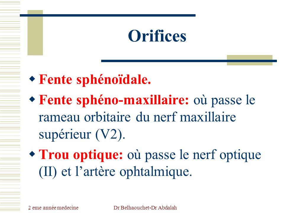 2 eme année medecine Dr Belhaouchet-Dr Abdalah Orifices Fente sphénoïdale. Fente sphéno-maxillaire: où passe le rameau orbitaire du nerf maxillaire su