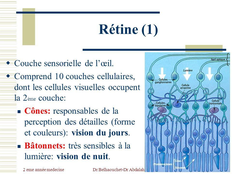 2 eme année medecine Dr Belhaouchet-Dr Abdalah Rétine (1) Couche sensorielle de lœil. Comprend 10 couches cellulaires, dont les cellules visuelles occ
