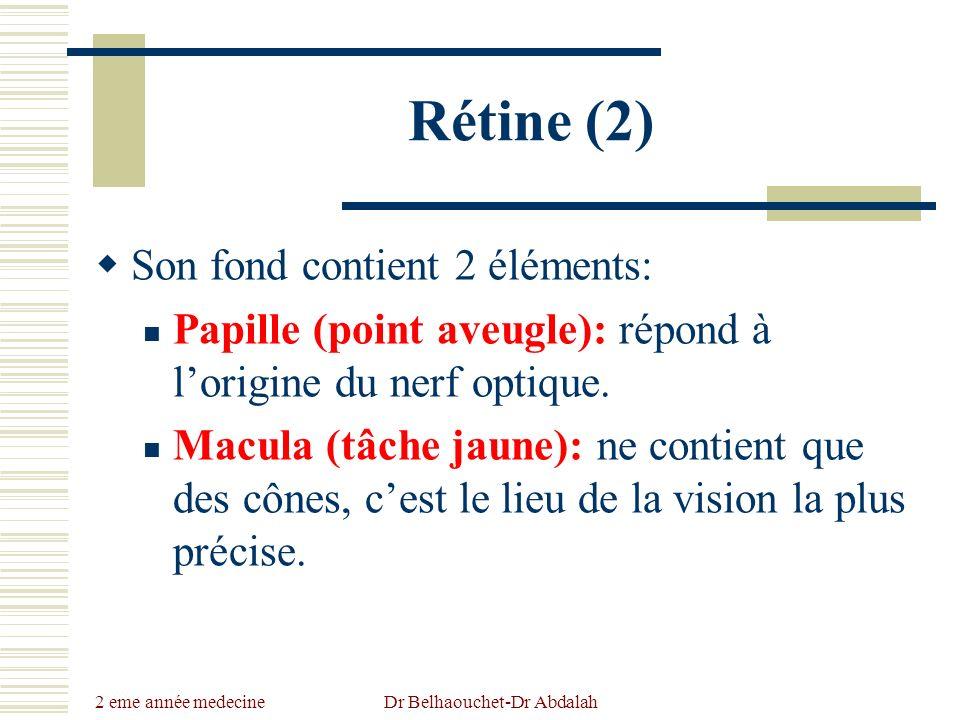 2 eme année medecine Dr Belhaouchet-Dr Abdalah Rétine (2) Son fond contient 2 éléments: Papille (point aveugle): répond à lorigine du nerf optique. Ma