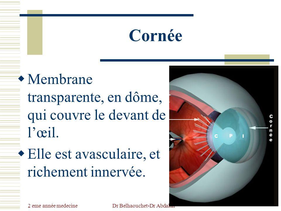 2 eme année medecine Dr Belhaouchet-Dr Abdalah Cornée Membrane transparente, en dôme, qui couvre le devant de lœil. Elle est avasculaire, et richement