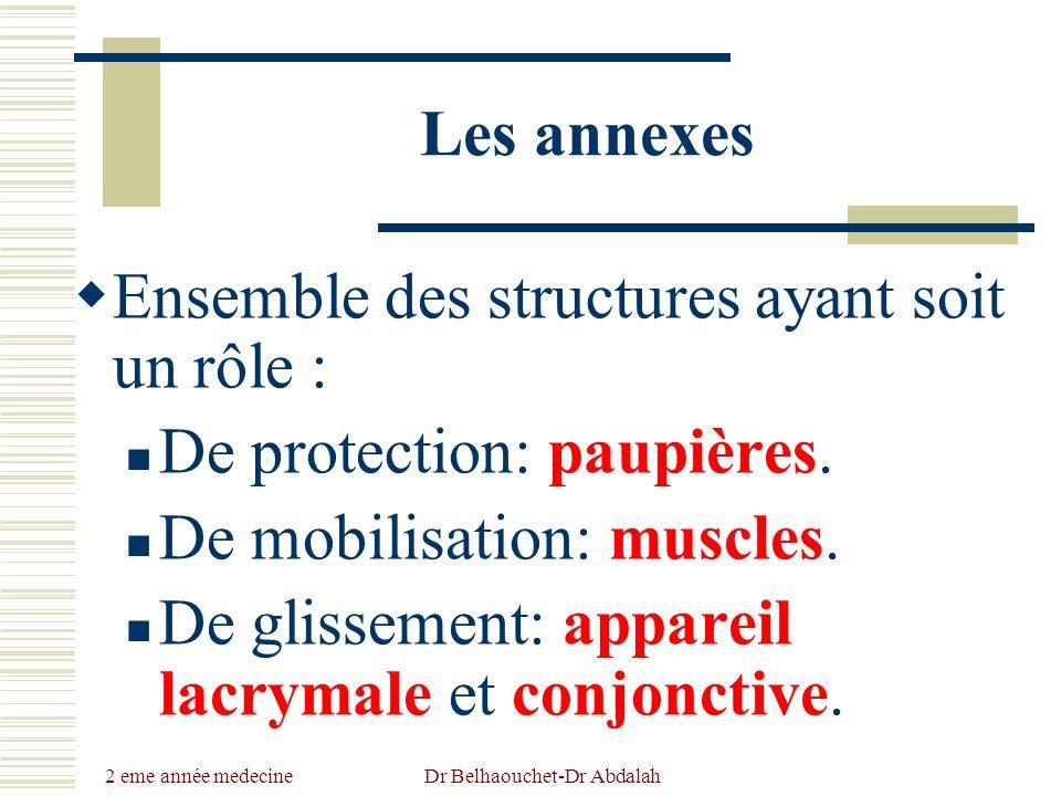 2 eme année medecine Dr Belhaouchet-Dr Abdalah Les annexes Ensemble des structures ayant soit un rôle : De protection: paupières. De mobilisation: mus