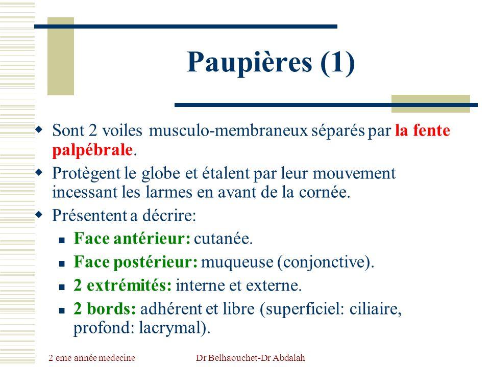 2 eme année medecine Dr Belhaouchet-Dr Abdalah Paupières (1) Sont 2 voiles musculo-membraneux séparés par la fente palpébrale. Protègent le globe et é