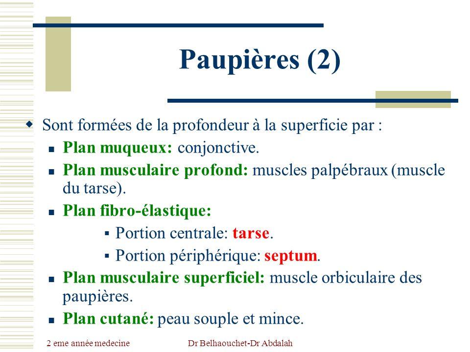 2 eme année medecine Dr Belhaouchet-Dr Abdalah Paupières (2) Sont formées de la profondeur à la superficie par : Plan muqueux: conjonctive. Plan muscu