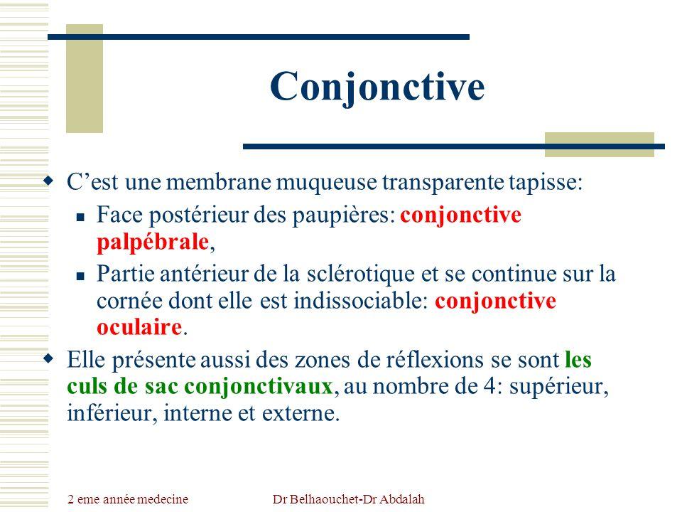 2 eme année medecine Dr Belhaouchet-Dr Abdalah Conjonctive Cest une membrane muqueuse transparente tapisse: Face postérieur des paupières: conjonctive