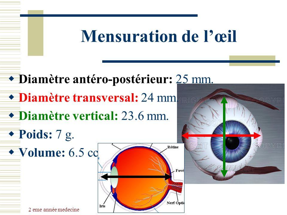 2 eme année medecine Dr Belhaouchet-Dr Abdalah Mensuration de lœil Diamètre antéro-postérieur: 25 mm. Diamètre transversal: 24 mm. Diamètre vertical: