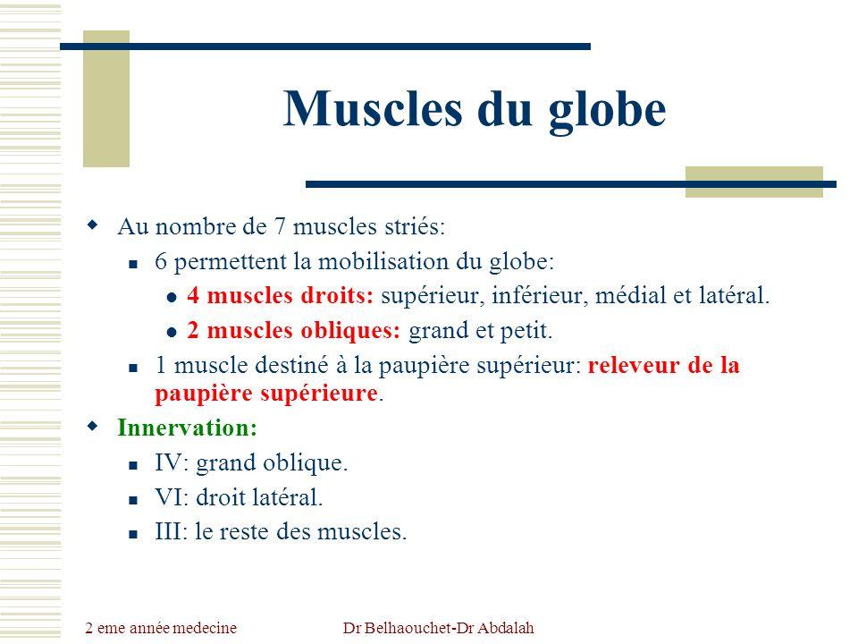 2 eme année medecine Dr Belhaouchet-Dr Abdalah Muscles du globe Au nombre de 7 muscles striés: 6 permettent la mobilisation du globe: 4 muscles droits