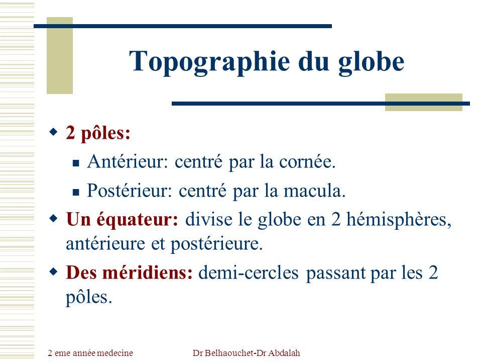 2 eme année medecine Dr Belhaouchet-Dr Abdalah Topographie du globe 2 pôles: Antérieur: centré par la cornée. Postérieur: centré par la macula. Un équ