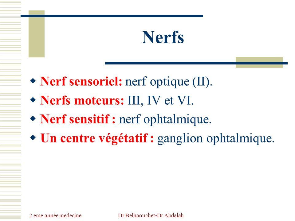 2 eme année medecine Dr Belhaouchet-Dr Abdalah Nerfs Nerf sensoriel: nerf optique (II). Nerfs moteurs: III, IV et VI. Nerf sensitif : nerf ophtalmique