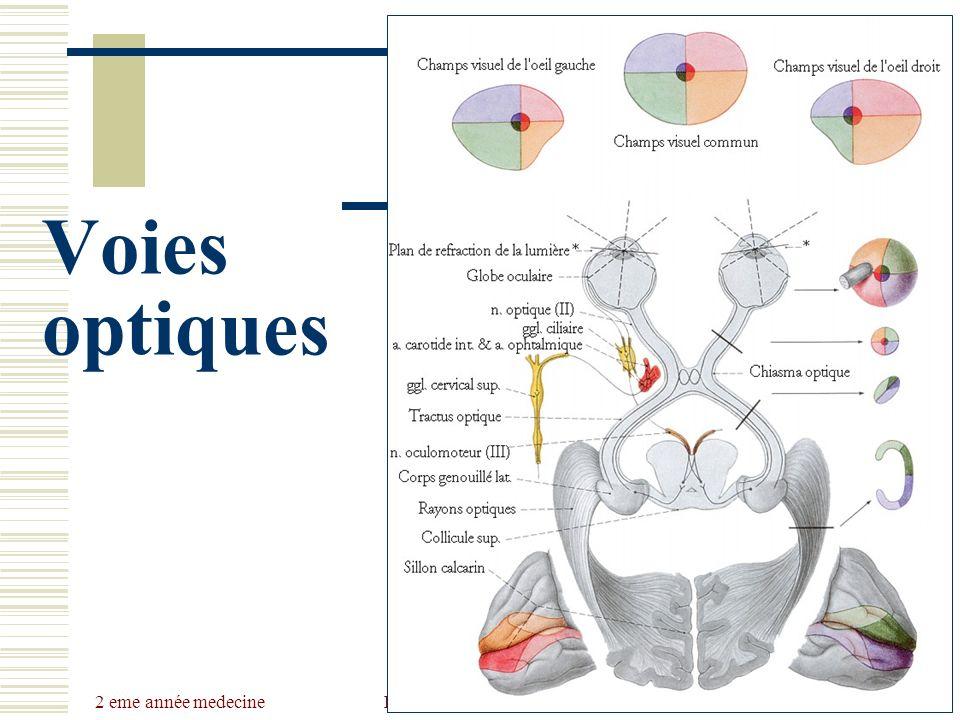 2 eme année medecine Dr Belhaouchet-Dr Abdalah Voies optiques
