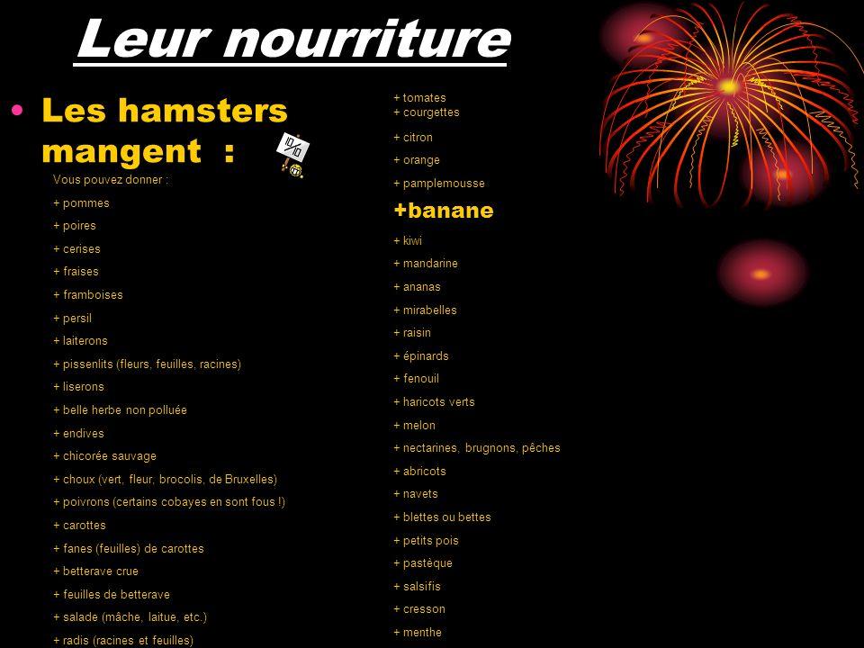 Leur nourriture Les hamsters mangent : Vous pouvez donner : + pommes + poires + cerises + fraises + framboises + persil + laiterons + pissenlits (fleurs, feuilles, racines) + liserons + belle herbe non polluée + endives + chicorée sauvage + choux (vert, fleur, brocolis, de Bruxelles) + poivrons (certains cobayes en sont fous !) + carottes + fanes (feuilles) de carottes + betterave crue + feuilles de betterave + salade (mâche, laitue, etc.) + radis (racines et feuilles) + tomates + courgettes + citron + orange + pamplemousse +banane + kiwi + mandarine + ananas + mirabelles + raisin + épinards + fenouil + haricots verts + melon + nectarines, brugnons, pêches + abricots + navets + blettes ou bettes + petits pois + pastèque + salsifis + cresson + menthe + aubergines