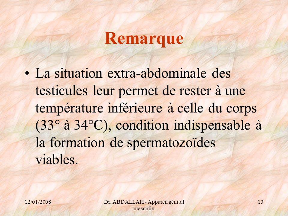 12/01/2008Dr. ABDALLAH - Appareil génital masculin 13 Remarque La situation extra-abdominale des testicules leur permet de rester à une température in