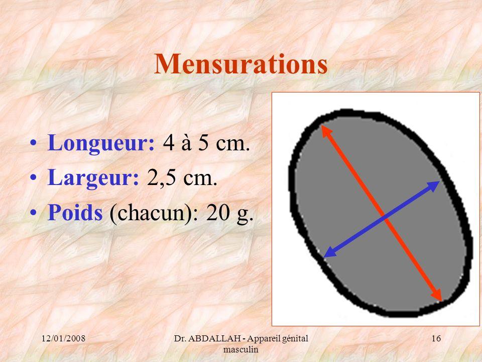 12/01/2008Dr. ABDALLAH - Appareil génital masculin 16 Mensurations Longueur: 4 à 5 cm. Largeur: 2,5 cm. Poids (chacun): 20 g.