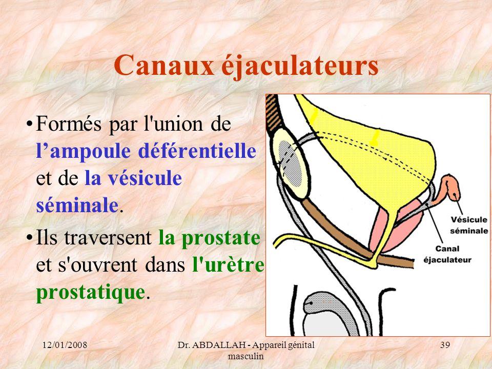 12/01/2008Dr. ABDALLAH - Appareil génital masculin 39 Canaux éjaculateurs Formés par l'union de lampoule déférentielle et de la vésicule séminale. Ils