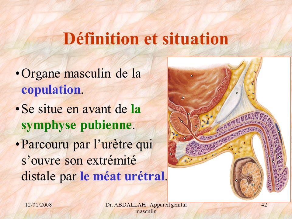 12/01/2008Dr. ABDALLAH - Appareil génital masculin 42 Définition et situation Organe masculin de la copulation. Se situe en avant de la symphyse pubie