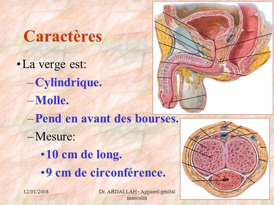 12/01/2008Dr. ABDALLAH - Appareil génital masculin 44 Caractères La verge est: –Cylindrique. –Molle. –Pend en avant des bourses. –Mesure: 10 cm de lon