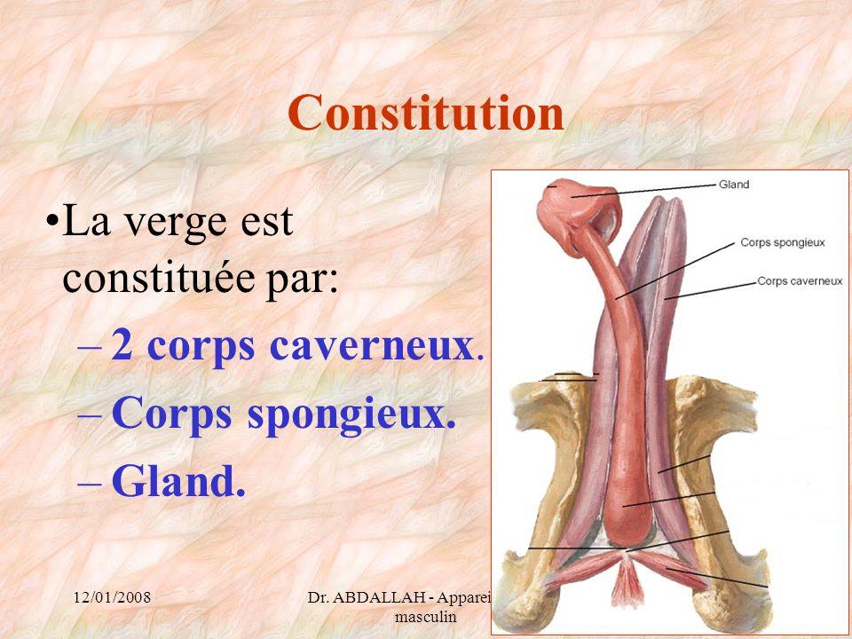 12/01/2008Dr. ABDALLAH - Appareil génital masculin 45 Constitution La verge est constituée par: –2 corps caverneux. –Corps spongieux. –Gland.