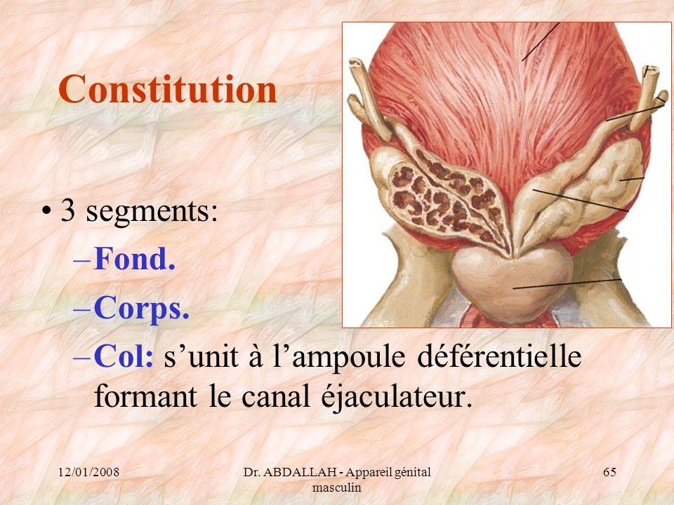 12/01/2008Dr. ABDALLAH - Appareil génital masculin 65 Constitution 3 segments: –Fond. –Corps. –Col: sunit à lampoule déférentielle formant le canal éj